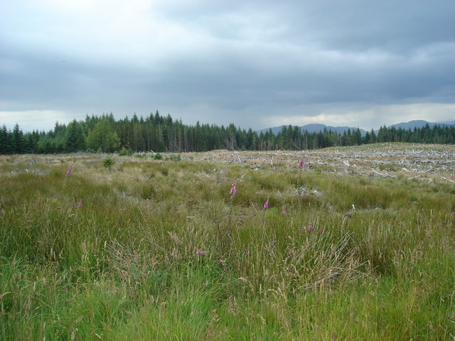Looking north across clear fell in Barcaldine Forest north of Dubh Loch Beag