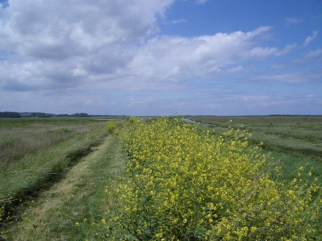 Norfolk Coast Path Near Burnham Norton