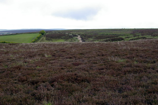 Exmoor Edge.