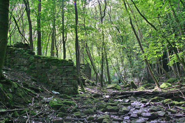 Rogerley quarry woods