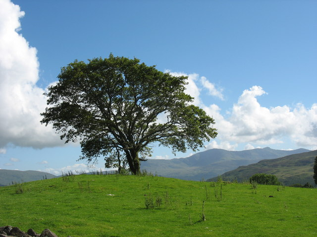 Tree on a knoll with Cadair Idris in the background