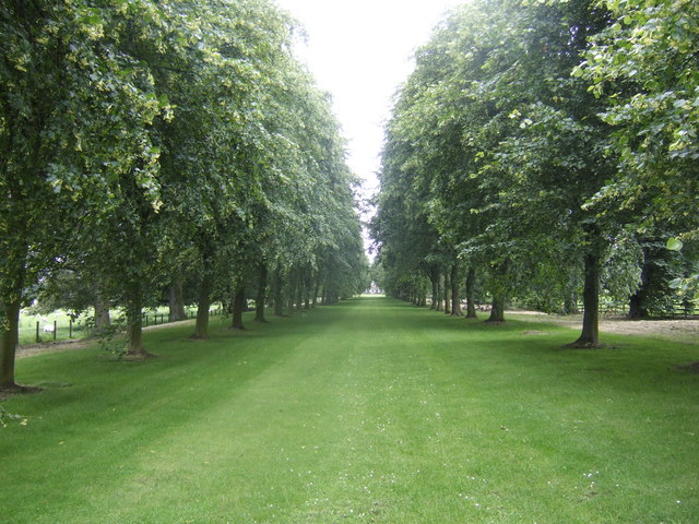 Lime avenue at Etal Manor