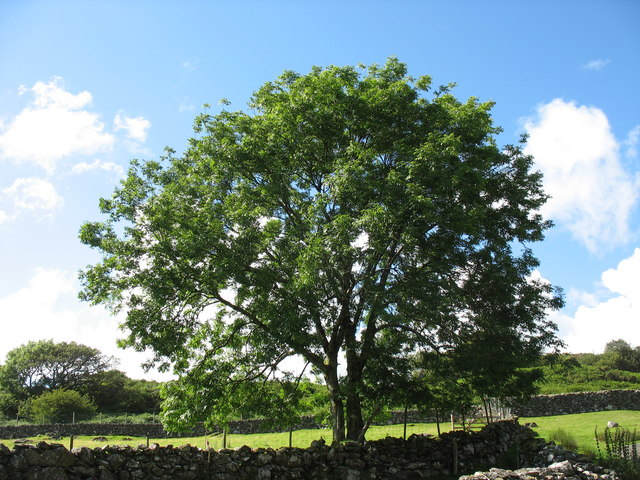 Tree above the old sheep dip