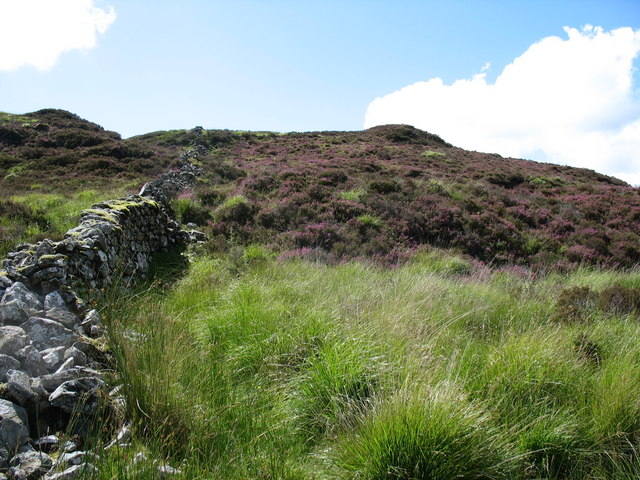 Ruined wall, tussocky grass and heather on Cerniau