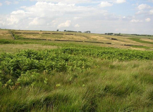 Enclosures on marginal land, Deer Hill Bents, Meltham