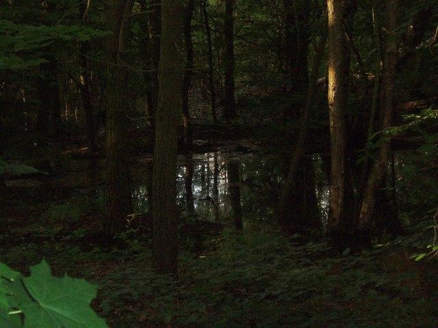 Bog in Laughton Forest