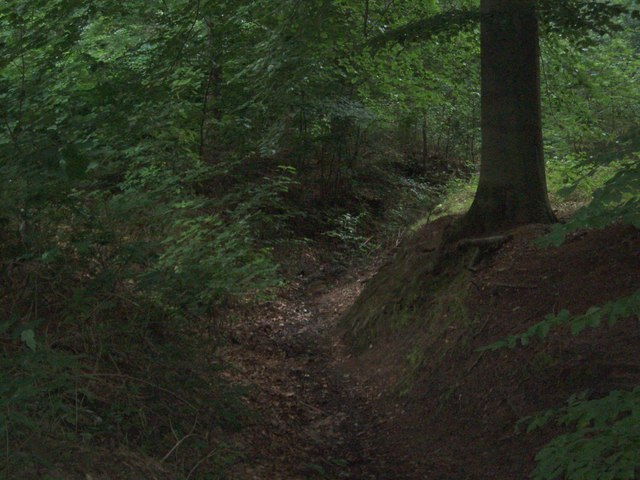 Dyke in Laughton Forest