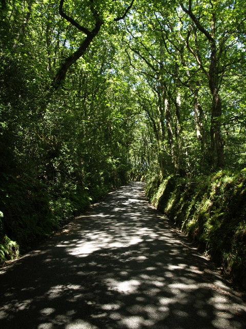 Lane near Penhallam