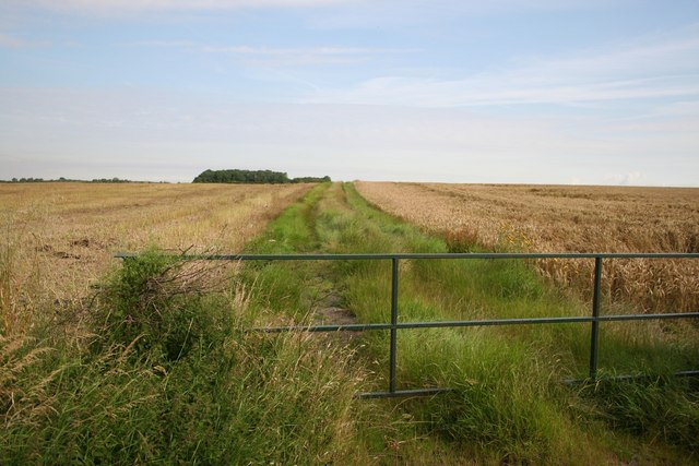 Gibbet Lane track