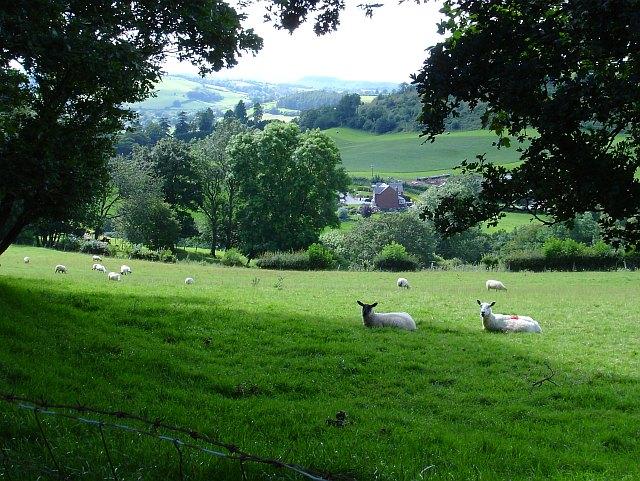 Pasture above Cyfronydd