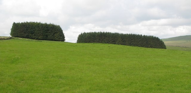 The two plantations north of Grindon Hill