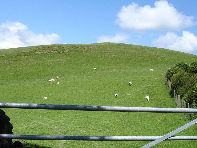 Pasture north of Cefn du uchaf
