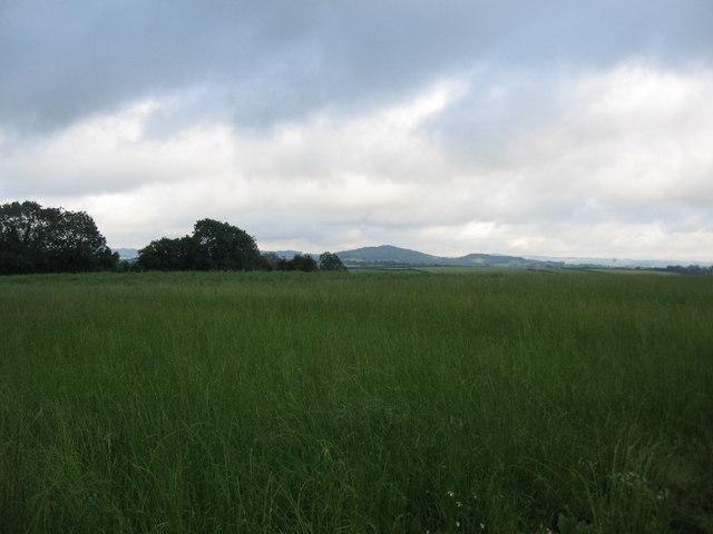 Farmland off Harpitts Lane