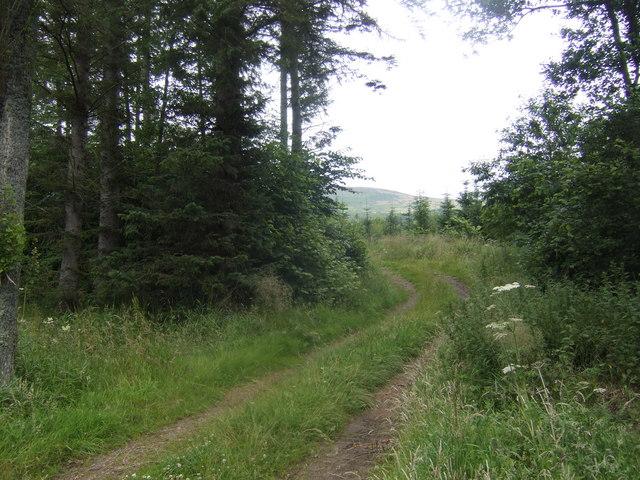 Track into Follyburn Wood