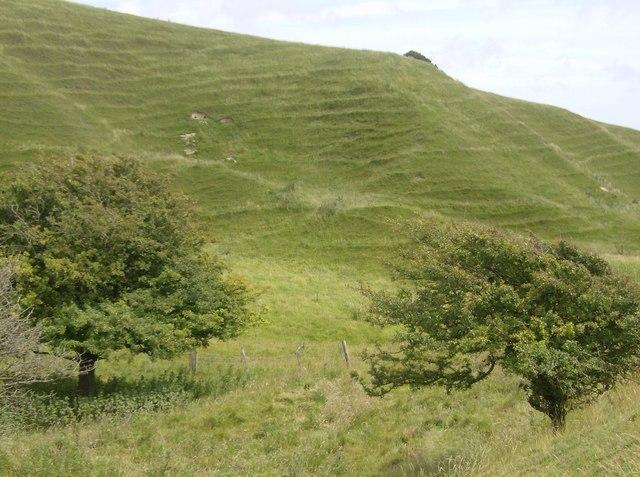 Chalk downland below Chillerton Down