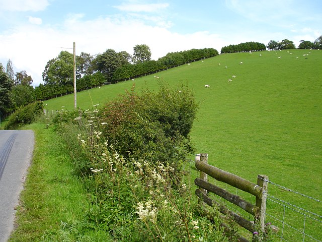 Pasture opposite Llanfair Wood