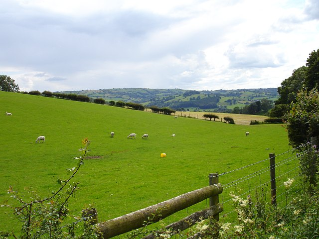 Pasture opposite Llanfair Wood