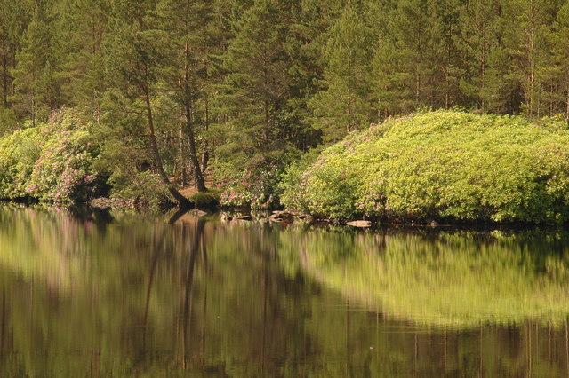 West shore of Loch Farr