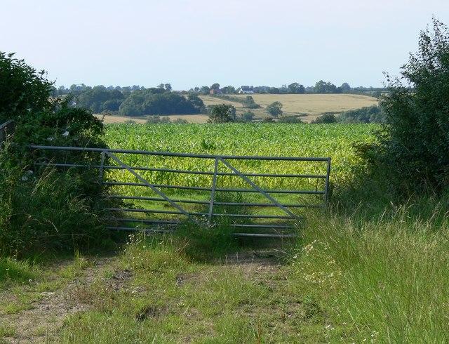 Farmland off Gaulby Lane