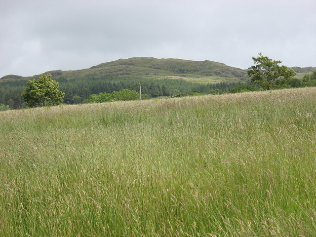 Hay meadow belonging to Fferm Blaen-y-glyn