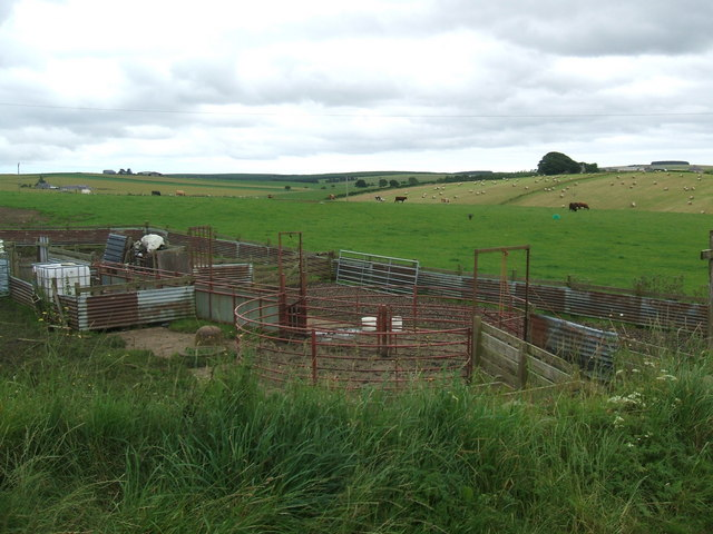 Cattle pens at Blackpots