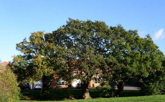 Protected oaks in the new developments Worcester