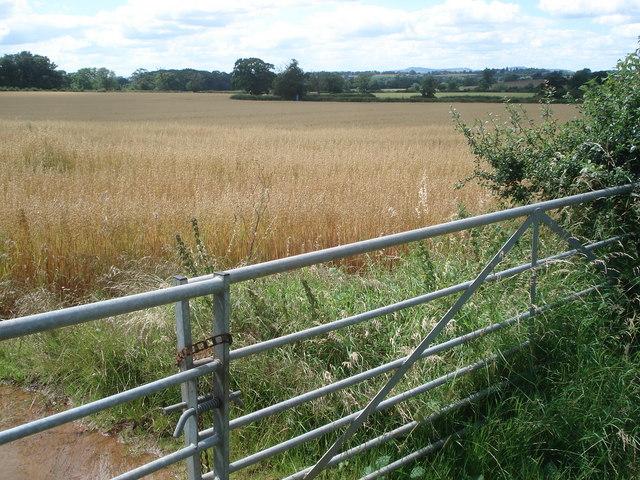 Corn field near Webbhouse Farm