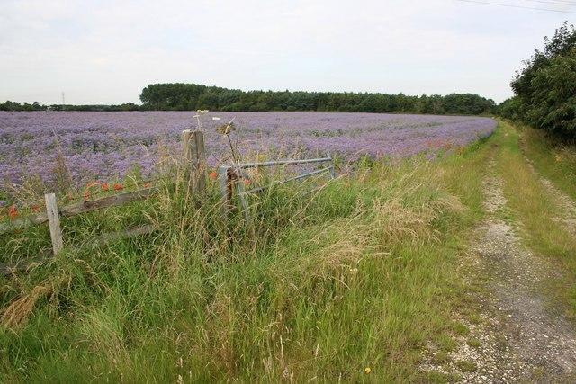 Farm track at Fonaby