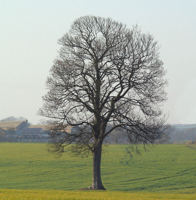 Isolated tree.