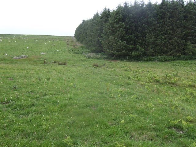 Rough grazing and conifers