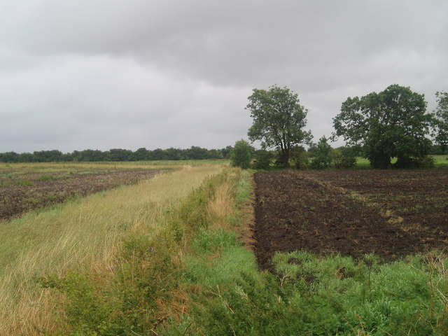 Field boundary off Station Road Owston Ferry