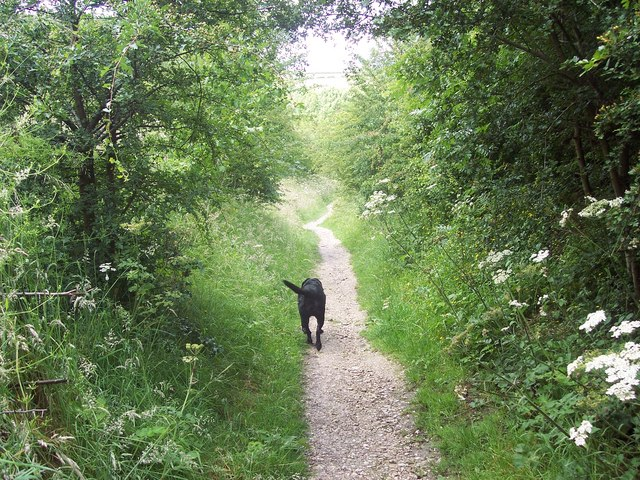 Guinness leads the way to Wharram Percy