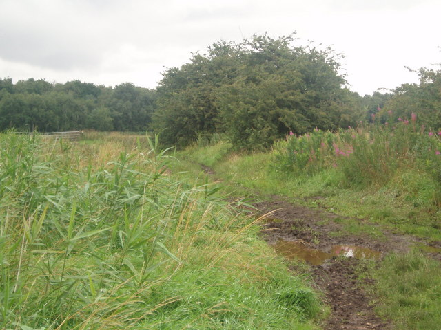 Field track off Acres Lane