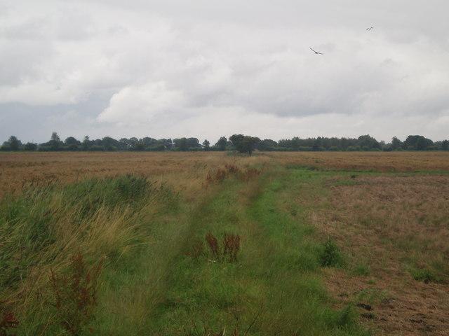 Lane off Idle Bank