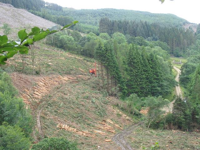 Forestry activity in Cwm Afon Wen