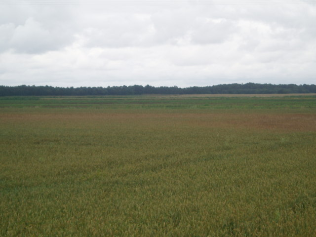 Fields near Acres Lane
