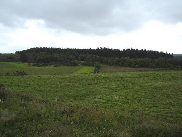 Oldman Wood