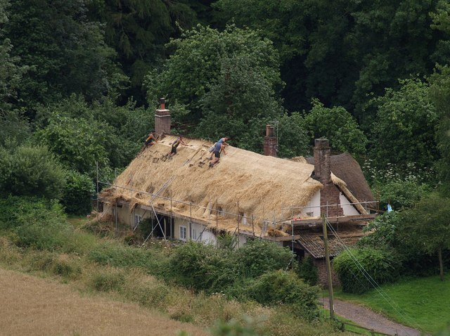 Thatching at Dunster