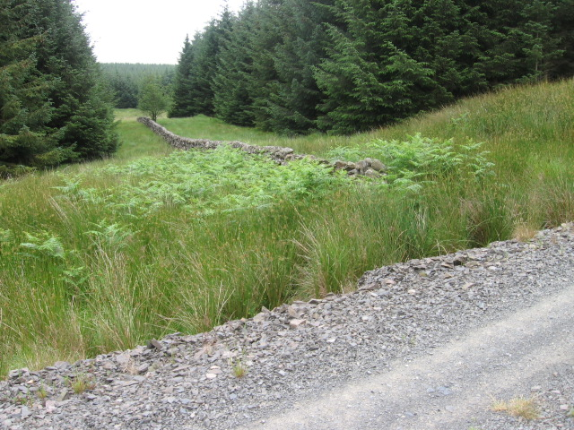 Old wall and fire break