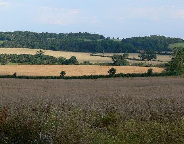 Farmland near Frisby, Leicestershire