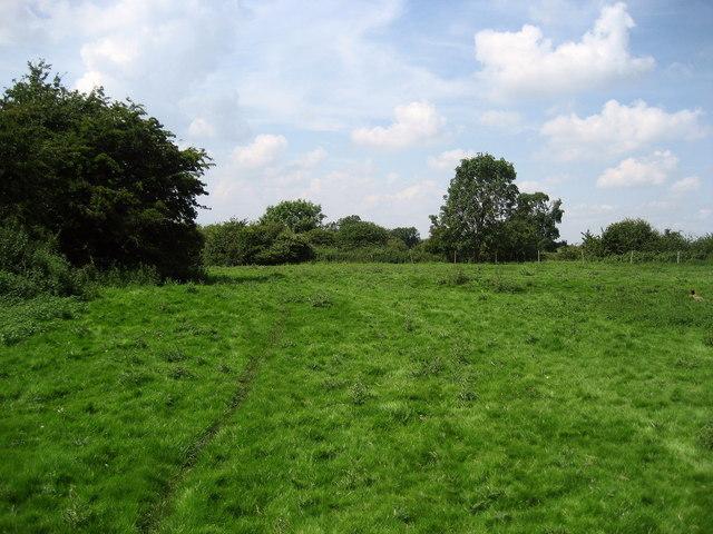 Pasture near Morton-on-Swale