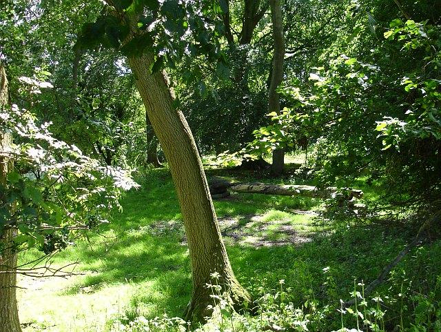 Woodland near the Gaer