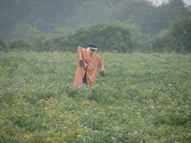 Rain-Soaked Scarecrow