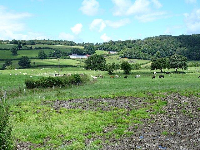 Cattle at Moydog Fawr