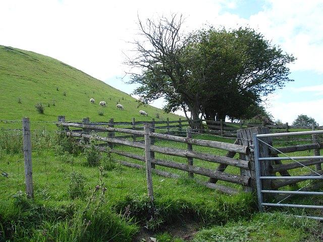 Sheep pen, sheep and hillside