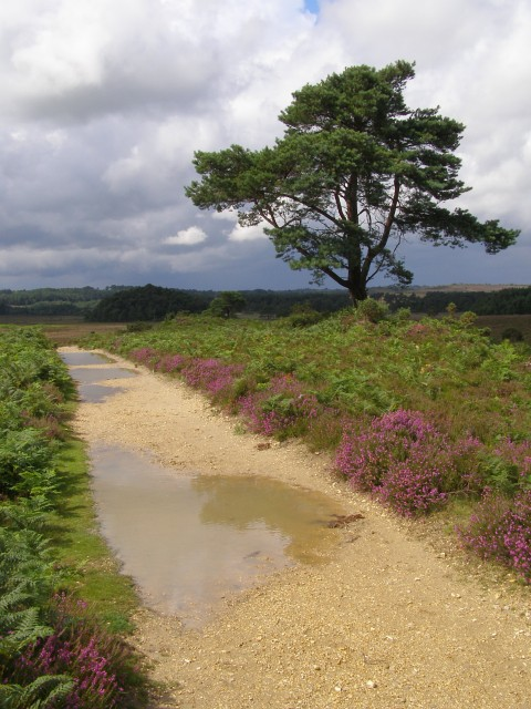 Path north-east of Brown Loaf, New Forest