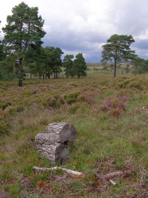 Kingston Great Common, New Forest