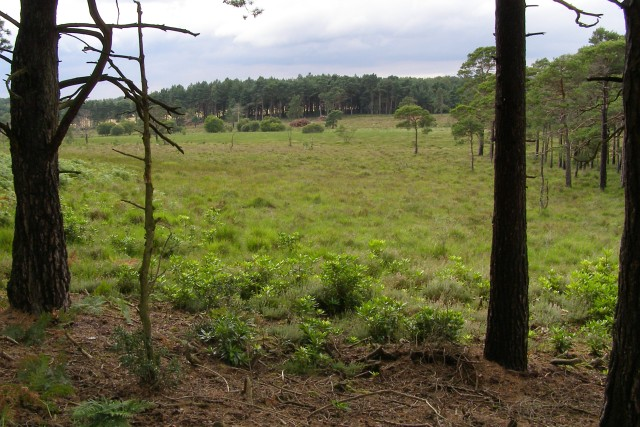 View across the bog, Kingston Great Common, New Forest