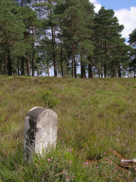 Boundary marker on Kingston Great Common, New Forest