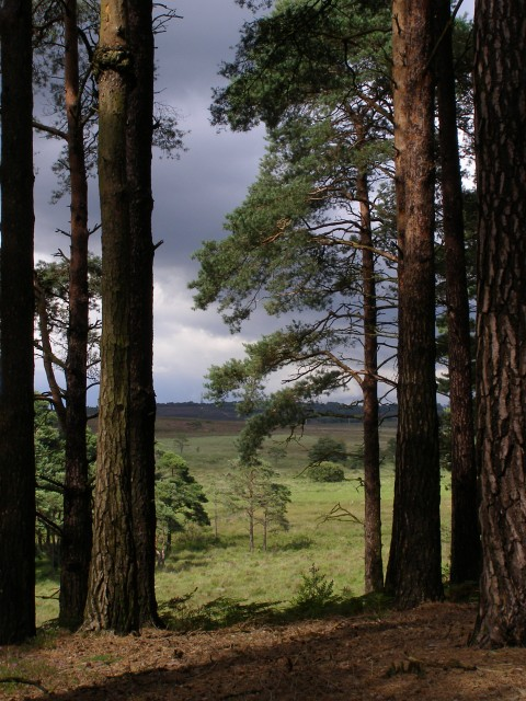 View from the pines, Kingston Great Common, New Forest